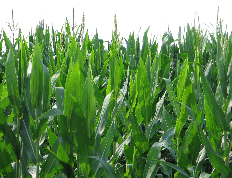 Definitions >> Biomass Definition - Clean Energy Ideas