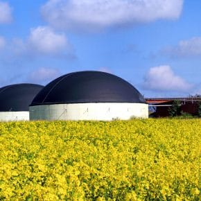 The different pros and cons of biomass energy.