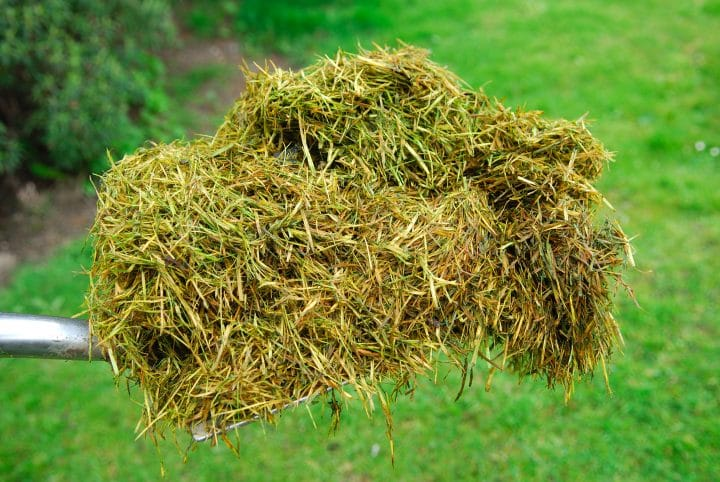 Grass clippings are an example of biomass.
