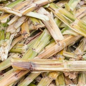 Biomass Energy (Bioenergy) - Clean Energy Ideas